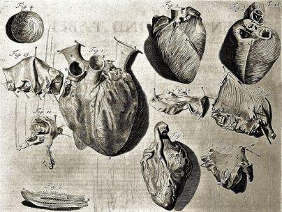 L0000339 Heart illustration, 18th century
